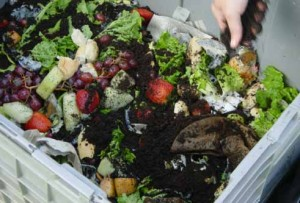Recycle your food scraps